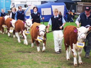 Bridgewater High students with their miniature Herefords