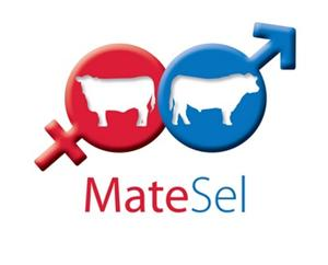 Matsel