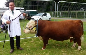 Andrew & Marie Bayliss showcased some Starburst Hereford cattle at the Turriff annual show.  Mini Goldrush was a highlight and placed a respectable third in Any Other Breed against some spectacular Lincoln Reds.  Goldrush drew a lot of attention, with many people wanting to photograph him especially beside standard size Herefords.   The weather was tremendous and great fun was had by all.