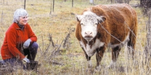 Julie Stott of Australian Miniature Herefords