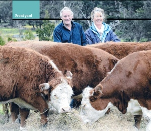 Alison and John with their mini Herefords