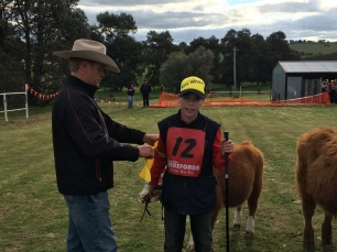 Cattle handling is easy